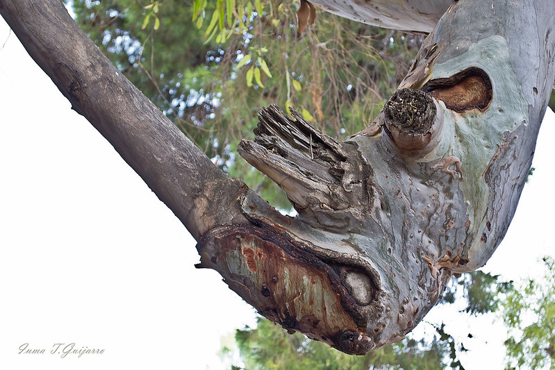Árbol Rinocerante