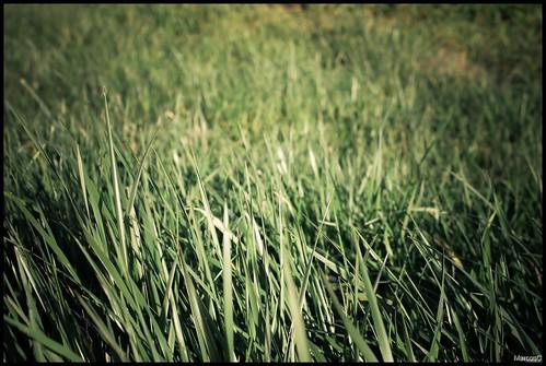 Verde 1 by MarcosCousseau