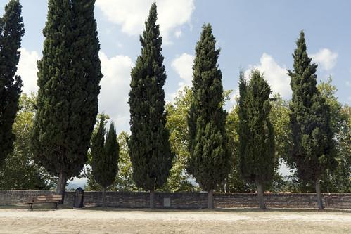 trees urban alberi bench suburban fabrizio urbino 2012 visons panchina olivi