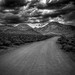 Buttermilk Road B/W