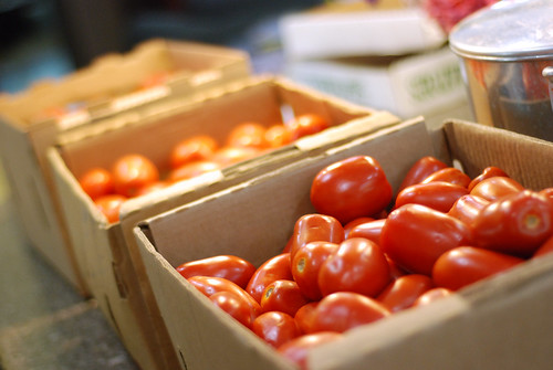 The tomatoes of 2012