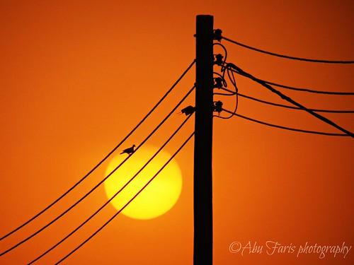 light sunset sun bird colors silhouette canon evening countryside sabia ksa غروب jazan السعودية ضوء كانون jizan جيزان sabya جازان صبيا الطمحة الطميحي