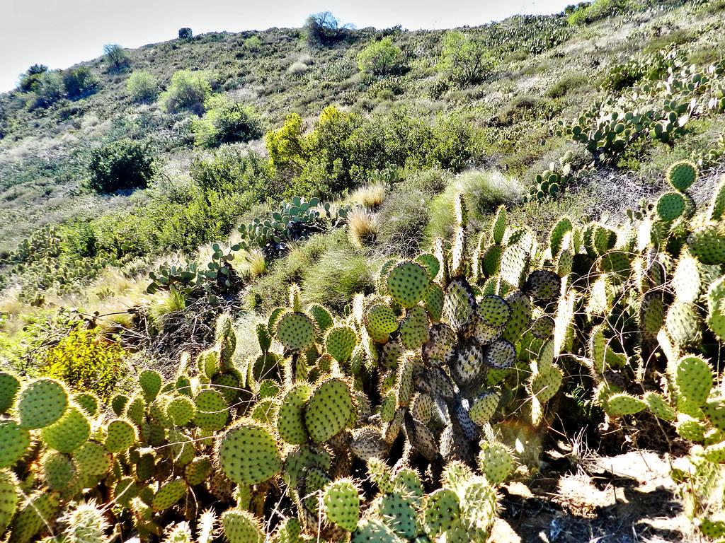 Santiago Oaks Regional Park Orange County California Tripcarta