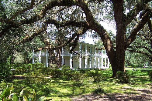 statepark usa tree unitedstates florida liveoak antebellum baum wesleyhouse waltoncounty edengardens quercusvirginiana virginialiveoak pointwashington southernliveoak fisherbray
