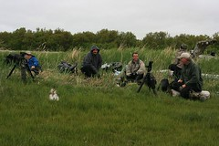 Ultimate Alaska Wildlife Safari