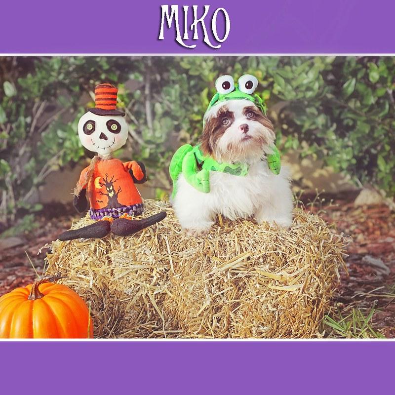 Mikos Halloween