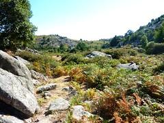 Sentier de Cagna devenue trace cairnée vers Bocca di Monaco