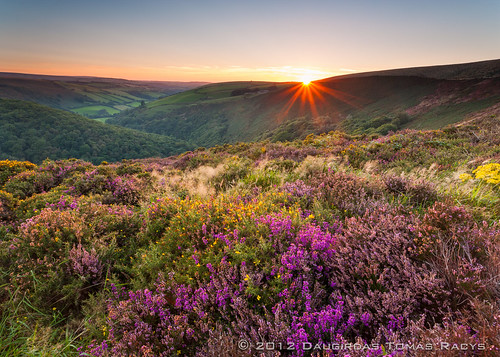 uk flowers trees sunset summer england green river landscape star countryside bush scenery unitedkingdom heather hills valley vegetation distance rolling starburst exmoor quantocks sunstar purplesky lynton