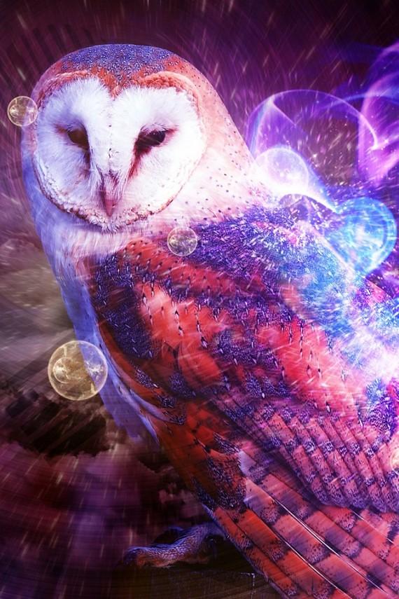 owl-city-zuhu