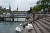 kthread and the swans of Zurich by kthread