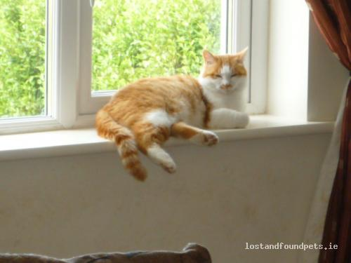 Wed, Sep 5th, 2012 Lost Female Cat - Punchestown Upper,, Kilteel, Naas, Kildare