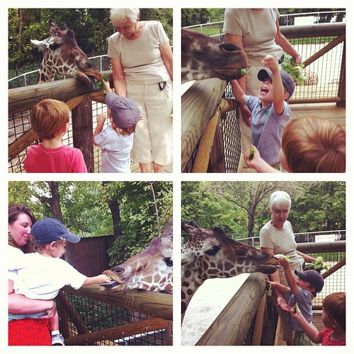 The boys loved feeding the giraffes for the first time at the zoo.
