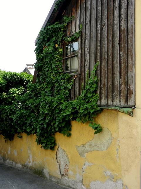 Kahlenbergerdorf_2012_10