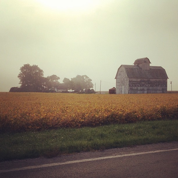 Fog Burning Off #barn #prairie #fall