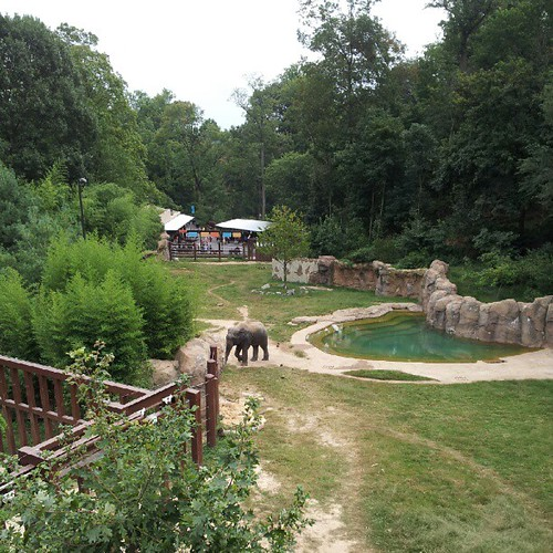The Elephants are here ! Woodley Park National Zoo Opening Elephant Trails