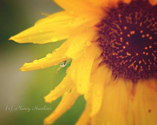 Summer's Fading by Nancy Hawkins