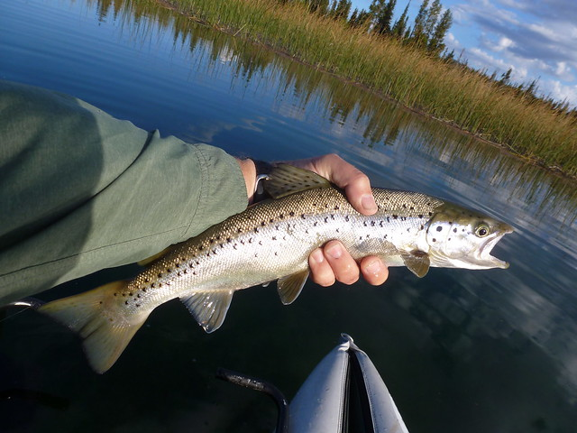 hosmer lake atlantic salmon