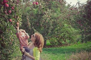 Apples-0167