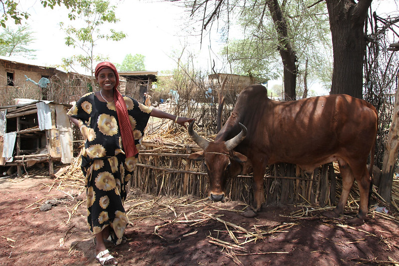 Cattle fattening by women (Mi'eso)