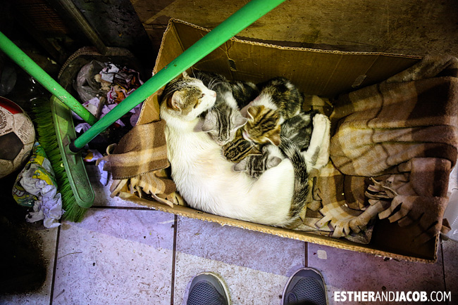 Litter of Cats in a Cusco Shop | What to do in Cusco | Peru Travel Photographer