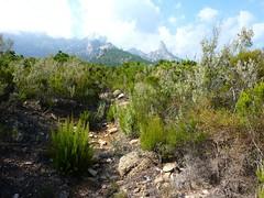 Chemin de la Montagne aux Plages : le plateau 487m et Punta Buvone et di Bonifacio