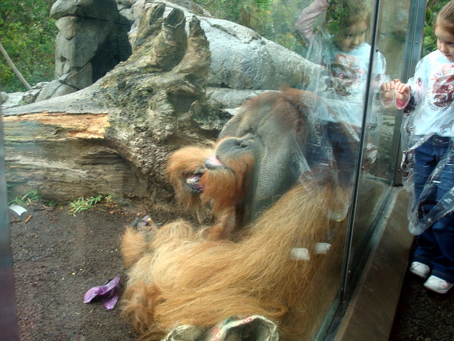 orangutan - can you bring food into san diego zoo