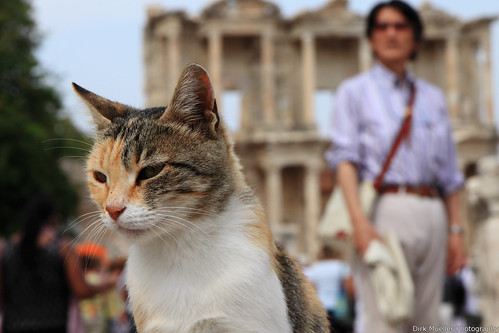 The Cat, the Tourist and the ancient by Dirk0608