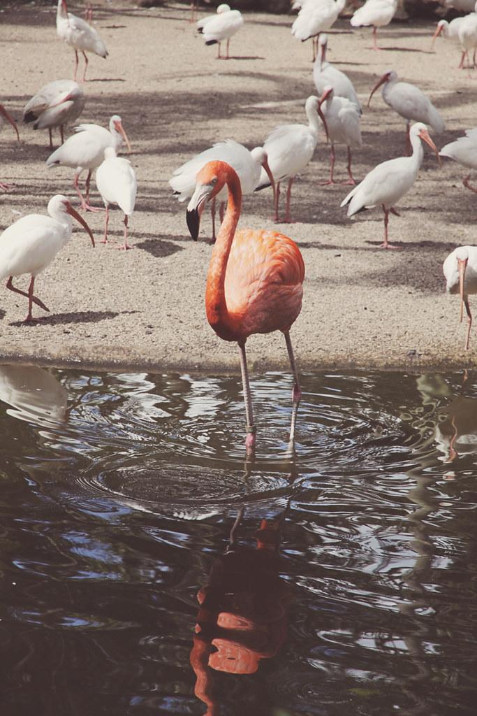 Flamingo Gardens 42