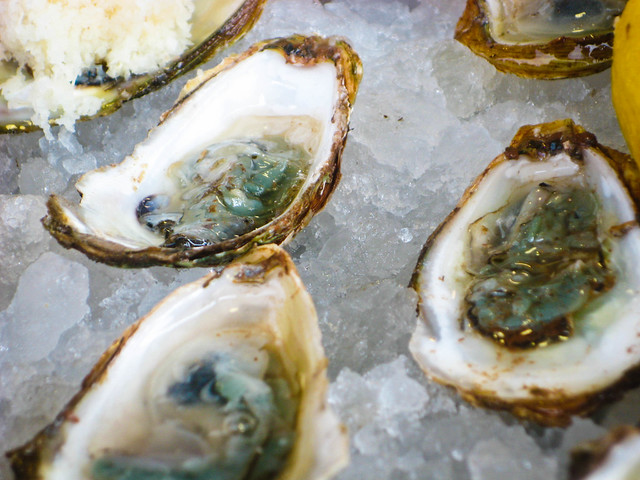 Oysters Closeup