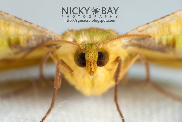 Moth - DSC_6511