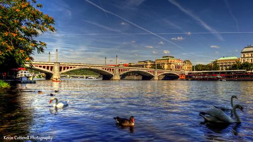 bridge river swan europe prague praha swans czechrepublic bohemia vltava hdr europeanunion josefov vltavariver photomatixpro sonydschx20v manessuv