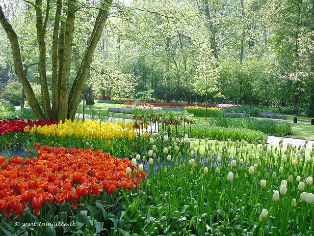 Dutch tulips keukenhof gardens holland 4003 potd for Arboles de jardin fotos