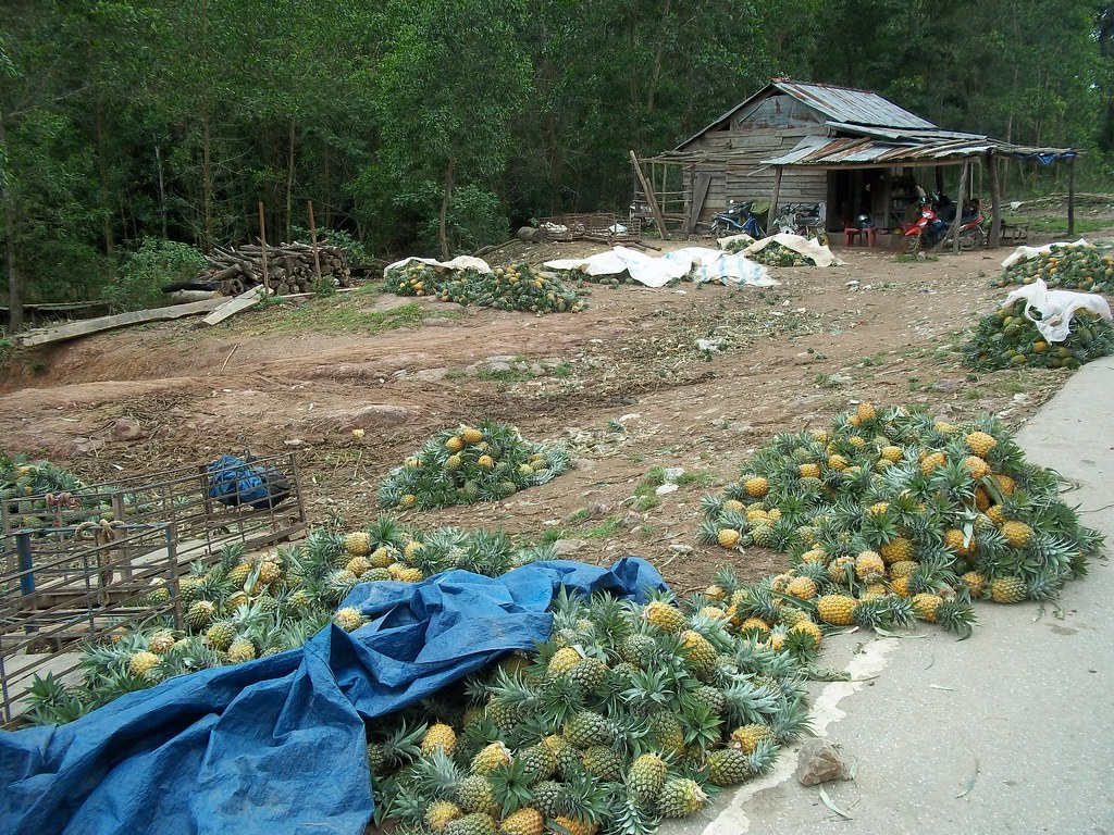 Fresh Pineapple, Vietnam