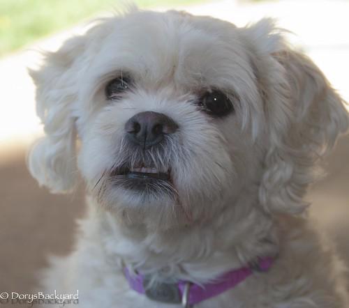 DogBlogWE101512-4