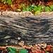 Autumn Fungus