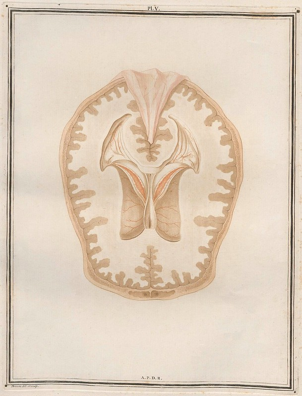 Traité d'Anatomie et de Physiologie (Vol. 2 neuroanatomy) by Félix Vicq D'Azyr 1786 e