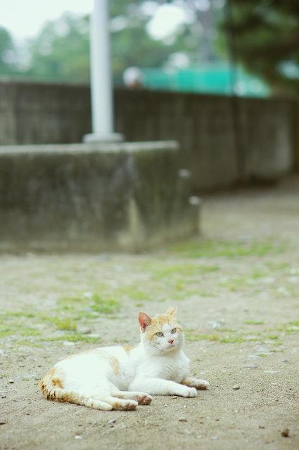 cat (79)