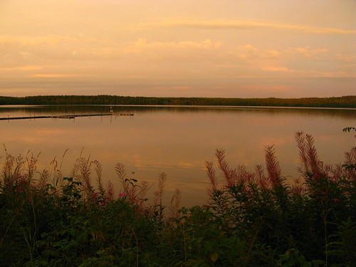 lake sweden lac lupin svergie suède västergötland jogen épilobes kölingared