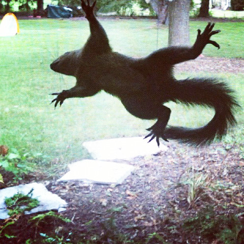 squirrels2-0912