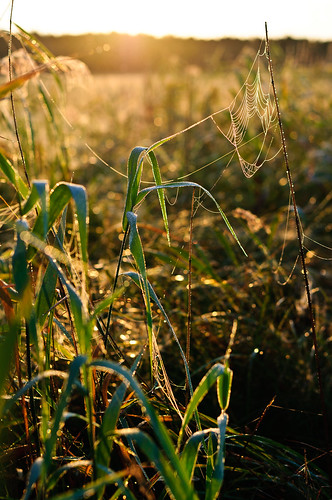 morning wisconsin backlight sunrise river 50mm prime nikon spiderweb september cattails dew nikkor f18 wi spiderwebs 2012 50mmf18 d90 nikkor50mm nikon50mm 50mmf18g nikond90 nikkor50mmf18g nikon50mmf18g jasonhedlund