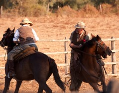 animal sports, rodeo, equestrianism, western riding, equestrian sport, sports, reining, cowboy,