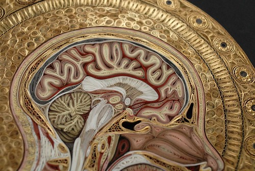 Angelico - brain detail
