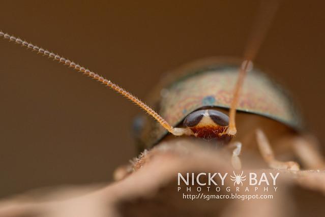 Pill Cockroach - DSC_4693