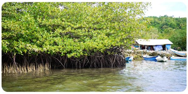 Nusa Ceningan Mangrove
