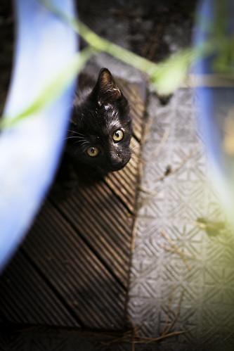 Rinkai, Stray Kitty in Process of Domestication