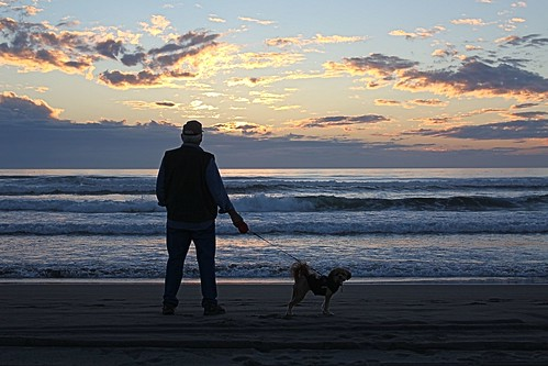 ocean sunset beach waves everyday 366 odc1 candidcanine dogchal