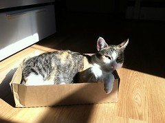 In a box, in the sun, loving life.