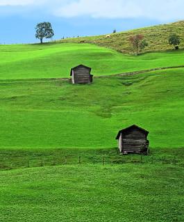 Mountain meadows after the rain - like emerald ~