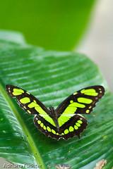 Fauna - Borboletas e outros insetos