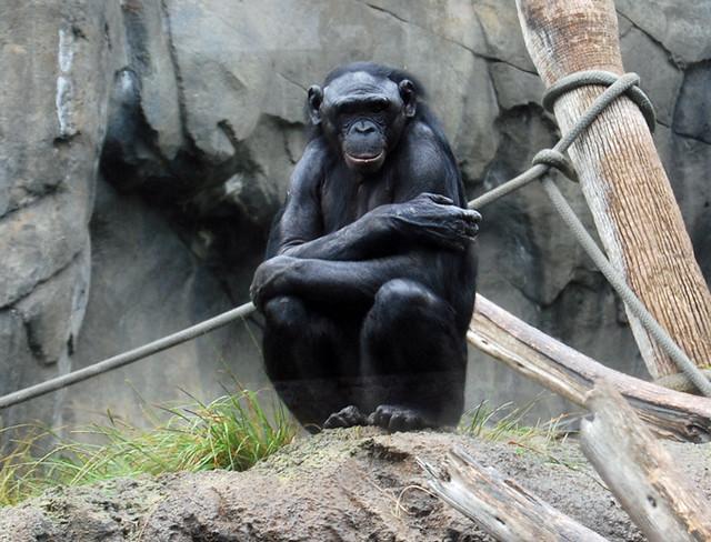 monkey-cold
